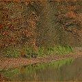 Reszta jesieni #jesień #ptaki #czapla #woda