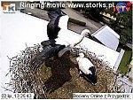 http://images28.fotosik.pl/14/61ce240010be5ed9m.jpg
