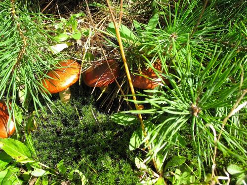 #las #grzyby #jesień #natura