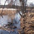 #rzeka