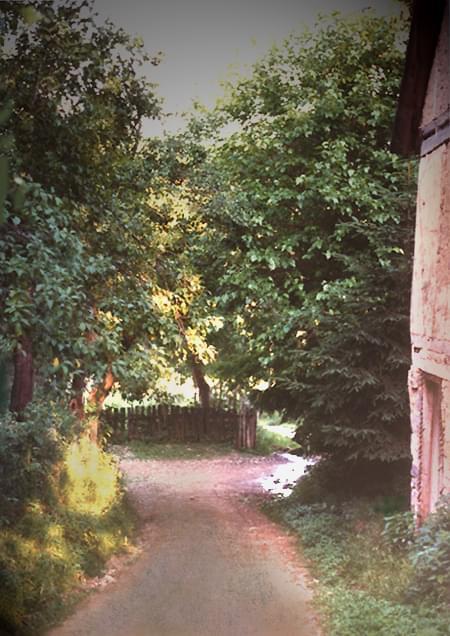 Przed deszczem, Duboćanji, Bosnja #wieś #Bosnja #Duboćanji #droga #drzewa