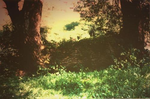 Zwalony pień, w drodze do Kljuća, Bosnja #las #pień #drzewa #trawa
