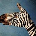 Nie moje zdjęcie, ale warte pokazania. Zazdroszczę ludziom talentu. Czy nie rewelacja?! #żyrafa #dłoń #palm #malarstwo