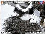 http://images28.fotosik.pl/19/ac5e44146406ef2em.jpg