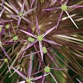 #łąka #rośliny #wiaty #drzewa