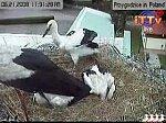 http://images28.fotosik.pl/234/17154d4bf6d974ffm.jpg