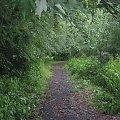 Taka tam leśna ścieżka... #las #ścieżka #drzewa