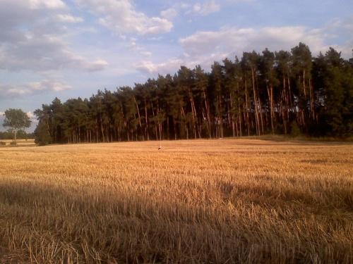 Pośrodku pola stoi bociek ,niestety komórka nie dała rady :):) #krajobrazy