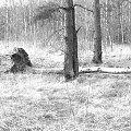 #drzewa #las #cegielnia