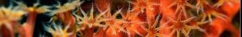 http://images28.fotosik.pl/285/312b004f72253e2e.jpg