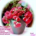 Życzenia dla Barbórek #Życzenia #Barbórka #bukiety #kwiaty #róże #bukiet #grudzień