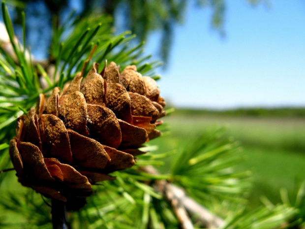 szyszunia :-) #ciekawe #natura #las #szyszka