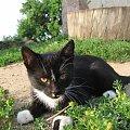 #Kot #koty #zwierzęta #fajne