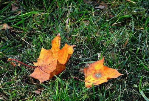 chyba zaczyna się jesień :P