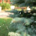 #słońce #rosa #krople #pajeczyna #liście #jesień #drzewa #kwiaty