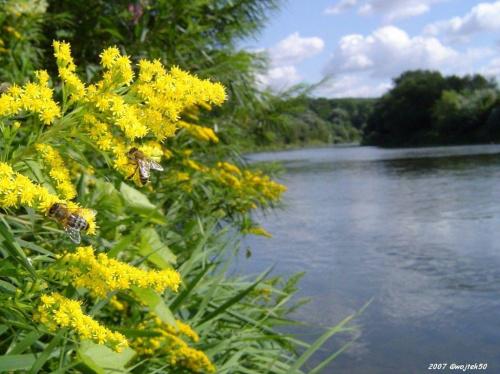 ... w upalny letni dzień ... #lato #pszczoły #rzeka #San