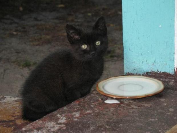 kiciuszka #kot #kotek