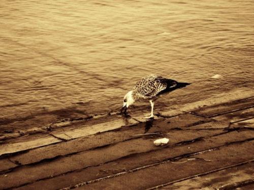Mewa #mewa #ptak #morze #chorwacja